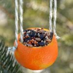 50+ Unique Homemade Bird Feeder Ideas