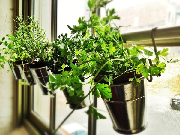 kitchen herb garden ideas 2