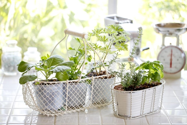 kitchen herb garden ideas 22