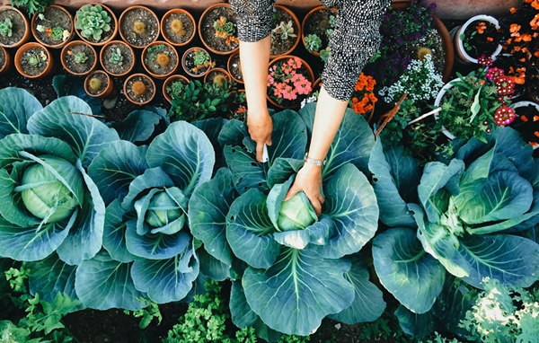 how to grow organic vegetables at home a
