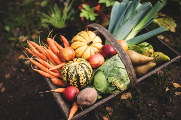 how to grow organic vegetables at home aa