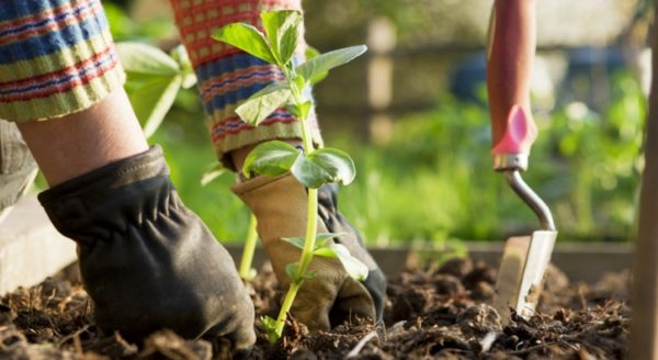how to grow organic vegetables at home