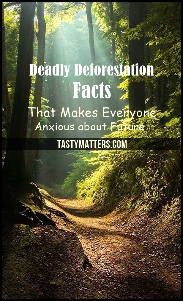 Deadly Deforestation Facts That Makes Everyone Anxious about Future
