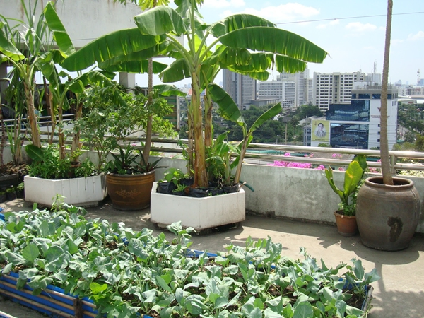 how to grow organic vegetables at home 2a