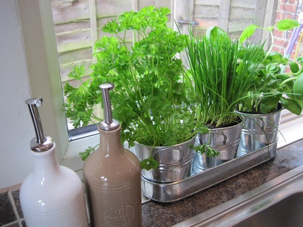 how to grow organic vegetables at home 3