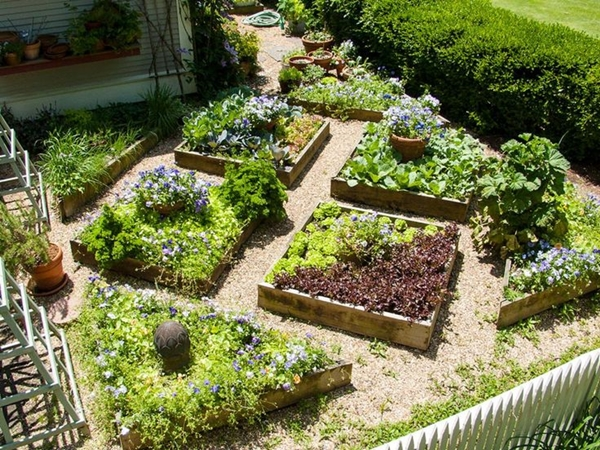 how to grow organic vegetables at home 4b