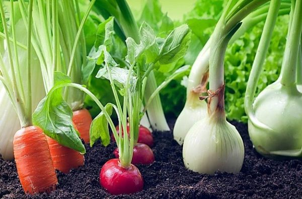 how to grow organic vegetables at home h