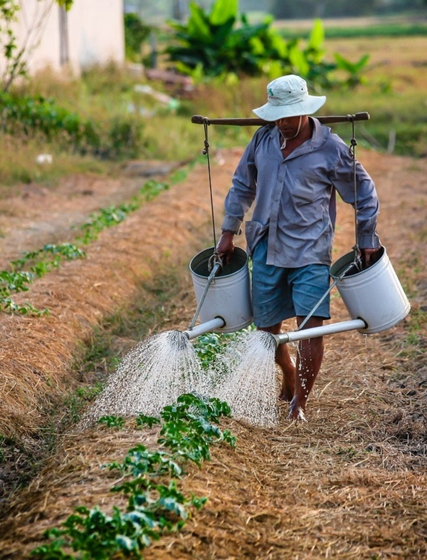 Essential Tips on Organic Farming for Beginners