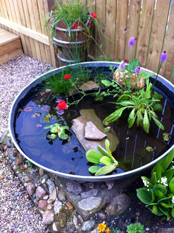 Small Backyard Pond Pictures To Inspire You